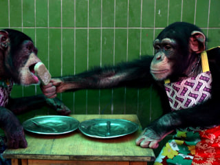 Do Apes Deserve 'Personhood' Rights? Lawyer Heads to N.Y. Supreme Court to Make Case