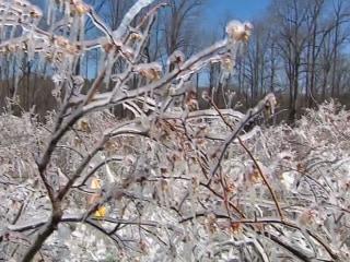 Farmers Fear Crop Damage After Winter Temperature Swings