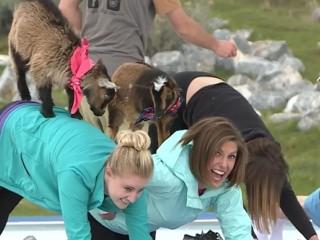 'GOGA' Mixes Playful Goats And Yoga