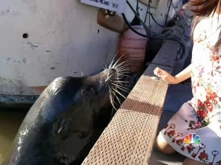 Sea Lion Attack: Child Victim's Father Speaks Out