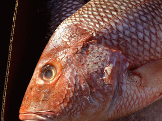 Fish Scales the Inspiration for Creating More Durable Clothing