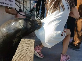 Family of little girl grabbed by sea lion speaks out