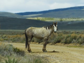 America Has a Wild Horse Problem, and There's No Easy Fix