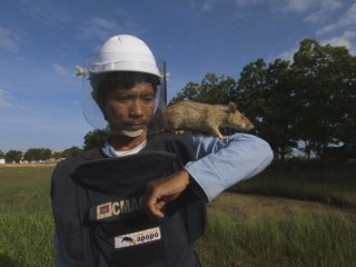 These Giants Rats Are the Best Solution to Cambodia's Landmine Problem
