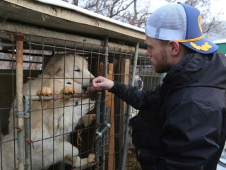 U.S. Olympian 'heartbroken' by South Korean dog meat farm