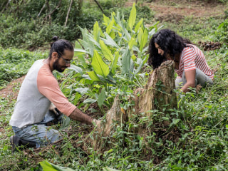 Living off the land: How these Puerto Rican farmers survived the storm