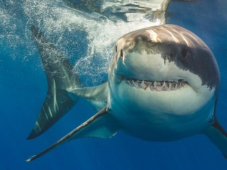 Chew on this: How to protect yourself from a shark attack