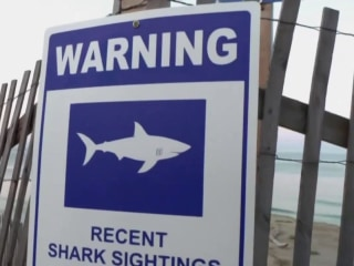 As shark scares prompt beach closures, what are the facts on this widely feared fish?