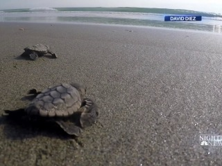 New lights installed along Florida's coastline to protect vulnerable baby sea turtles