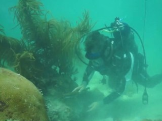 Behind the accidental discovery helping coral grow in record time