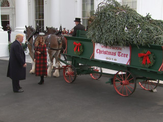 Trumps welcome White House Christmas tree
