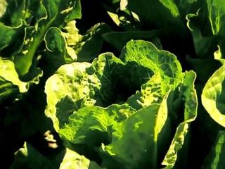 Don't eat romaine lettuce, CDC cautions after E. coli outbreak