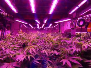 First East Coast recreational marijuana retail stores to open tomorrow