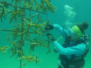 How scientists are working to save corals (Part 1)