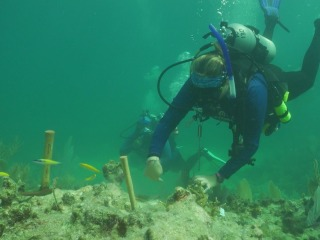 How scientists are working to save corals (Part 2)