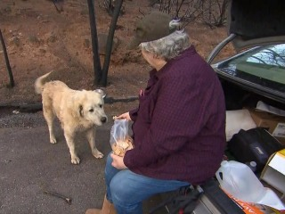 Weeks after deadly wildfire in Paradise, woman reunites with 2 dogs