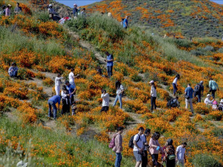 'Super bloom' of wildflowers draws crowds in Southern California