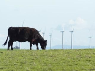 Can California get cows to burp less methane?