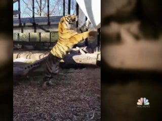 Topeka zookeeper hospitalized after tiger attack