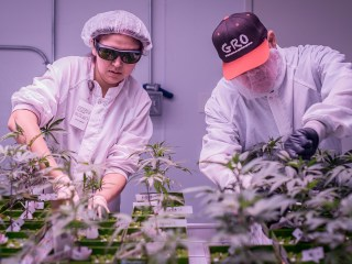 Weed City, USA: A desert town turns to cannabis to find jobs and fight painkiller addiction