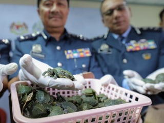 More than 5,000 smuggled turtles seized from airport luggage