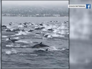Hundreds of dolphins put on a show for California onlookers