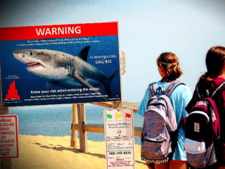 Shark sightings scaring off business in Cape Cod