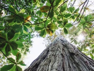 Startup aims to save forests by using trees as gravestones