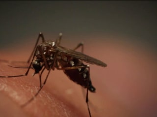 Two more people killed by rare mosquito-borne illness