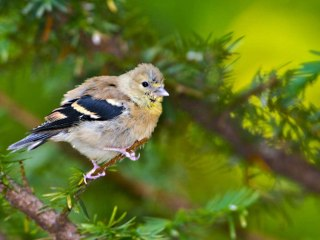 Why are billions of birds vanishing from North America?
