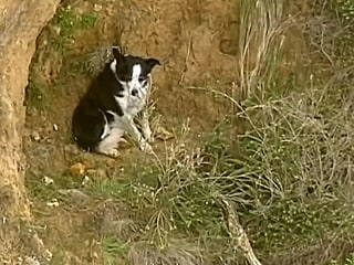 WATCH: Jimmy the dog rescued from a steep cliff on Australian coast