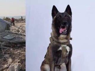 President Trump releases photo of 'hero dog' in al-Baghdadi raid