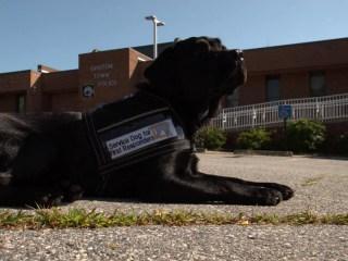 Puppies teach women behind bars to love again