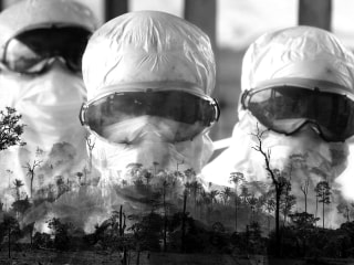 Are humans to blame for the coronavirus? How deforestation gives rise to pandemics
