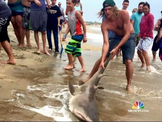 North Carolina Shark Attack Surge Keeps Beachgoers Out of Water