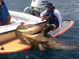 One Huge Fish Tale