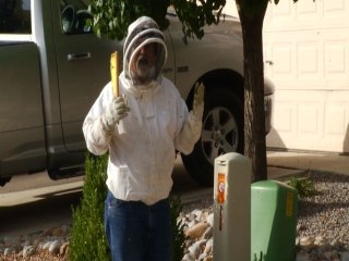 Aggressive Bees Invade Neighborhood