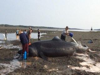 Beachgoers Attempt Shark Rescue