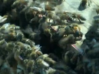 Wichita Buzzing After Truck Carrying Bees Loses Load