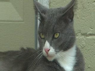 Florida Police Seek Cat Killer