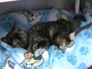 Frozen Kitten Rescued From Strom Drain