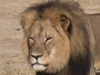 Man With Same Name as Lion Killer Swamped With Angry Calls