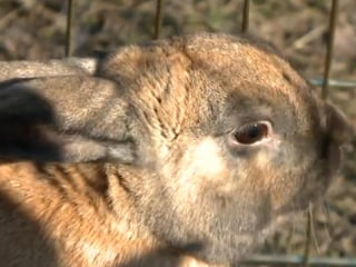Minn. Boy Opens Rabbits for Rent Business