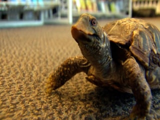 Turtle Calls Bookstore Home