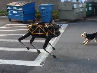 Watch Terrier Take On Robotic 'Dog'