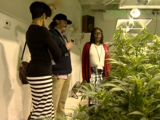 Jamaican Mayor Gets Lesson in Legal Pot