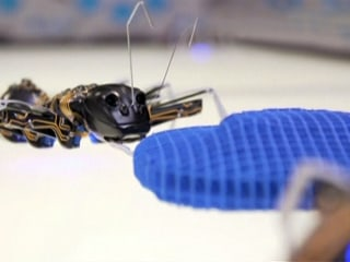 These Robo-Ants Are Equipped to Steal Jobs