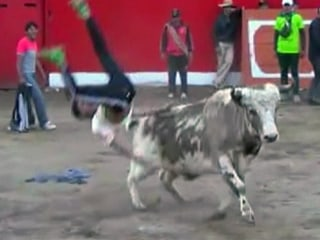 Revelers Gored at Festival Bullfights in Peru