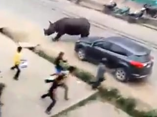 Watch Wild Rhino Wreak Havoc on Streets of Nepal