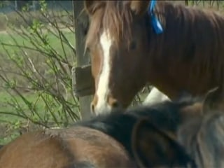 Oso: Helping The Horses Left Behind
